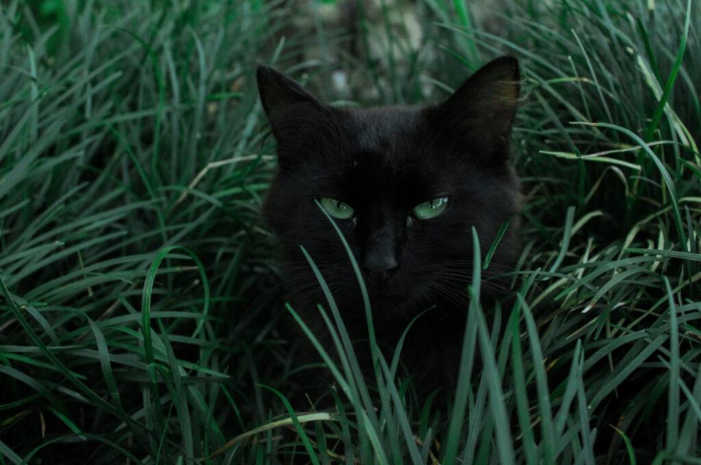 Имя для черной кошки